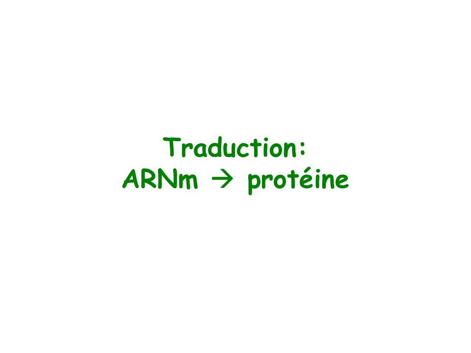 Traduction: ARNm protéine