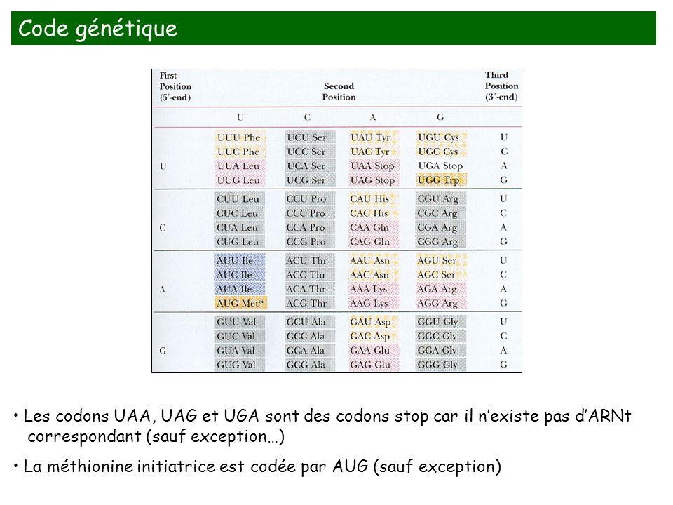 Les codons UAA, UAG et UGA sont des codons stop car il nexiste pas dARNt correspondant (sauf exception…) La méthionine initiatrice est codée par AUG (