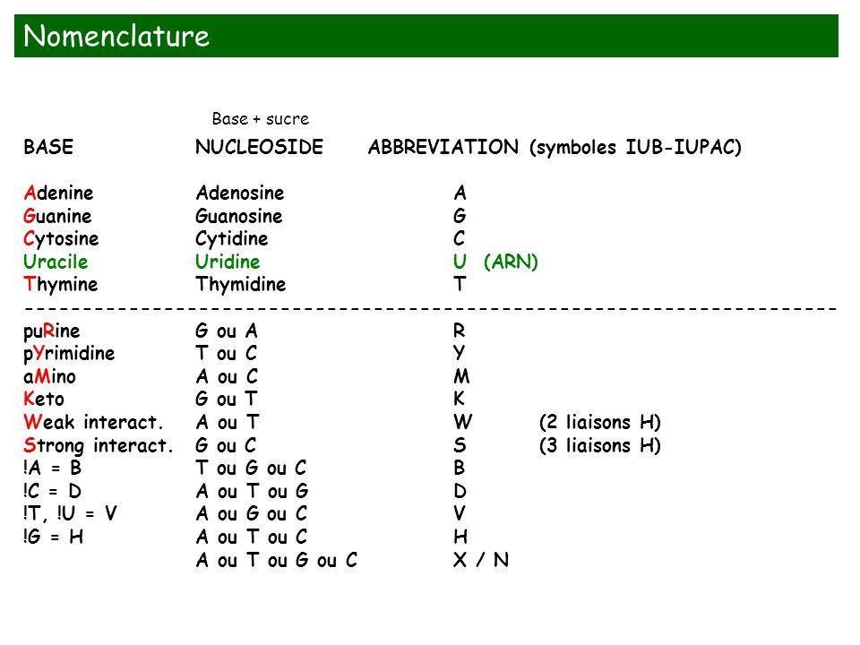BASENUCLEOSIDEABBREVIATION (symboles IUB-IUPAC) AdenineAdenosineA GuanineGuanosineG CytosineCytidineC UracileUridineU (ARN) ThymineThymidineT --------
