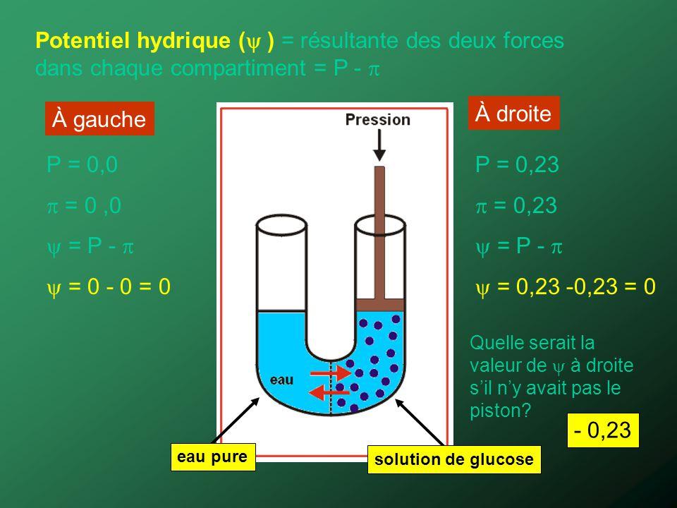 Potentiel hydrique ( ) = résultante des deux forces dans chaque compartiment = P - P = 0,23 = 0,23 = P - = 0,23 -0,23 = 0 P = 0,0 = 0,0 = P - = 0 - 0