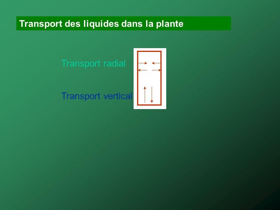Transport des liquides dans la plante Transport radial Transport vertical