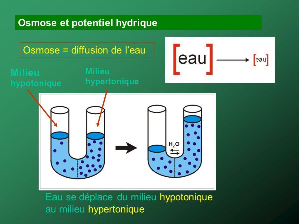 Osmose et potentiel hydrique Osmose = diffusion de leau Milieu hypotonique Milieu hypertonique Eau se déplace du milieu hypotonique au milieu hyperton