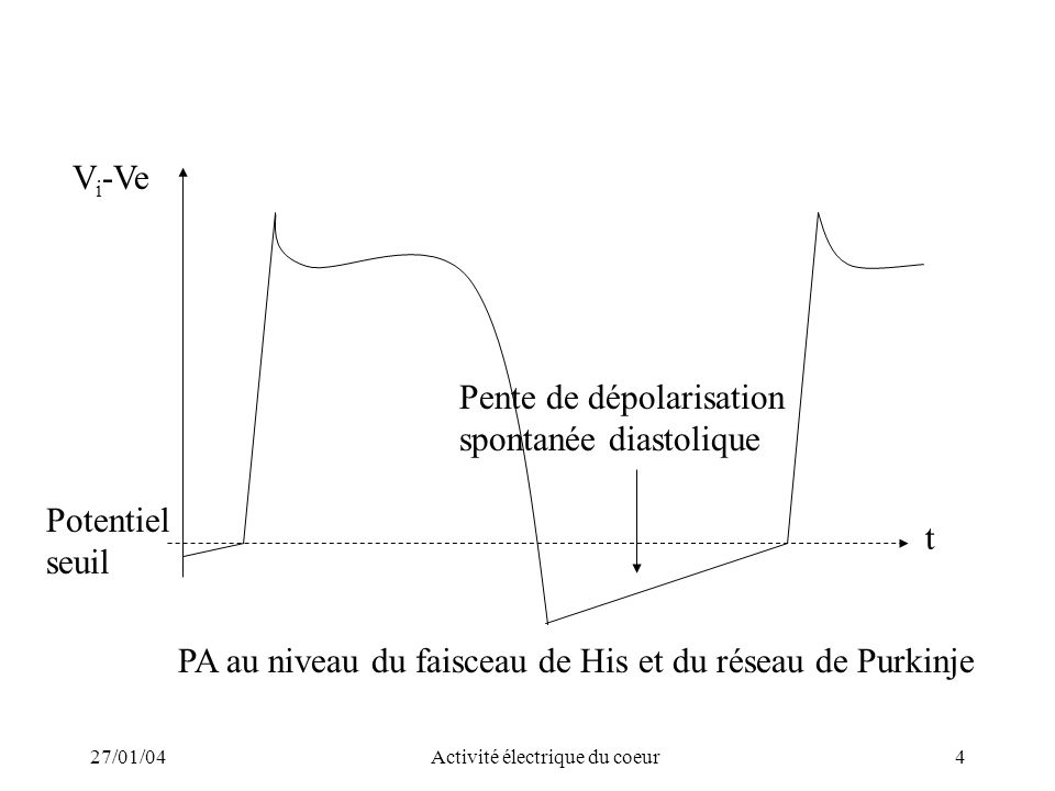 27/01/04Activité électrique du coeur5 t PA au niveau du nœud sinusal ou du nœud auriculo ventriculaire Potentiel de repos faible en valeur absolue +30mV V i -Ve Montée lente Forte pente de dépolarisation diastolique - 20mV 0 Pas de canaux Na+ « rapides », La période réfractaire limite la fréquence de stimulation.