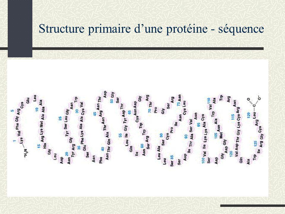 Structure primaire dune protéine - séquence