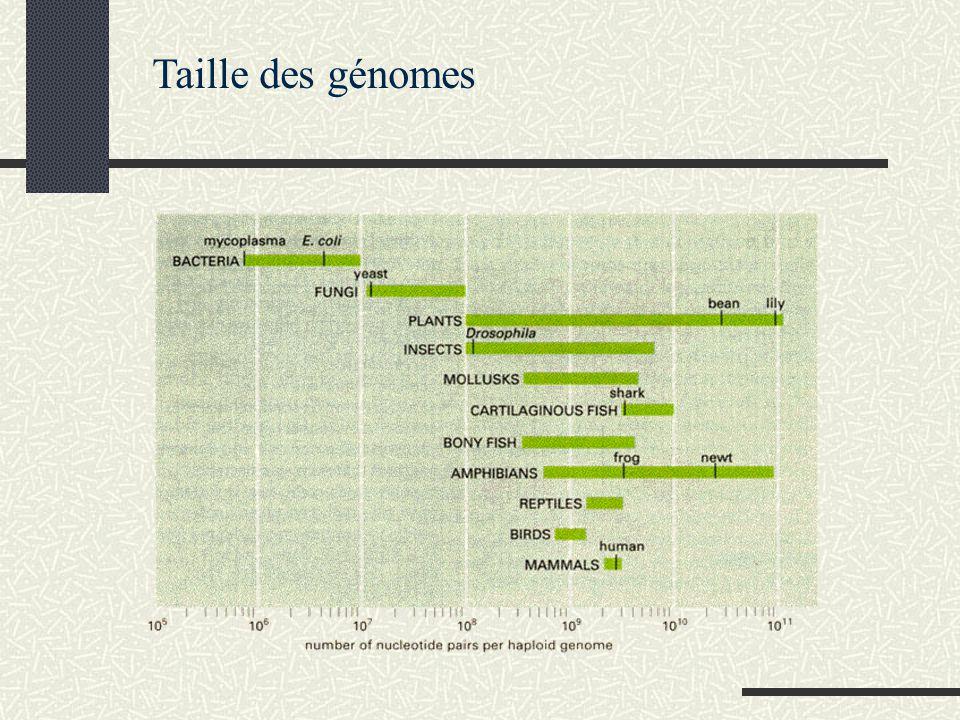 Taille des génomes