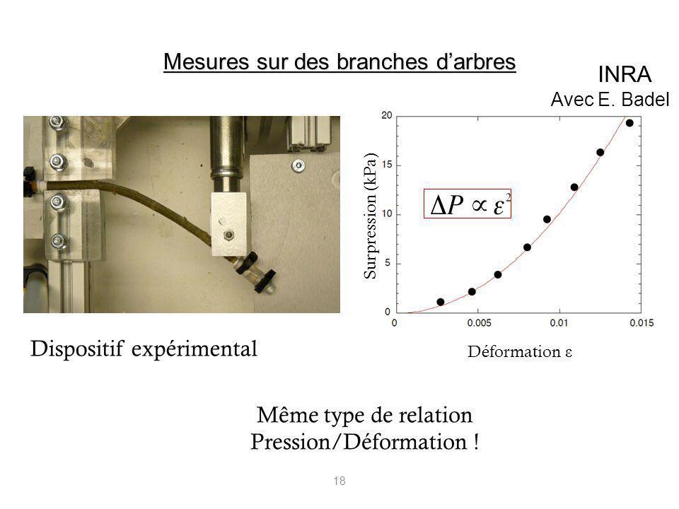 18 Dispositif expérimental Même type de relation Pression/Déformation ! Surpression (kPa) Déformation ε Mesures sur des branches darbres INRA Avec E.