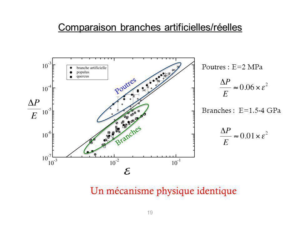 19 Un mécanisme physique identique Poutres :E=2 MPa Branches : E=1.5-4 GPa Branches Poutres Comparaison branches artificielles/réelles