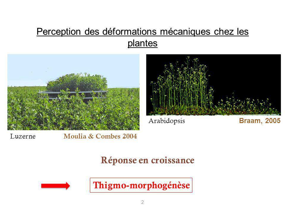 2 Perception des déformations mécaniques chez les plantes Arabidopsis Luzerne Réponse en croissance Braam, 2005 Moulia & Combes 2004 Thigmo-morphogénè