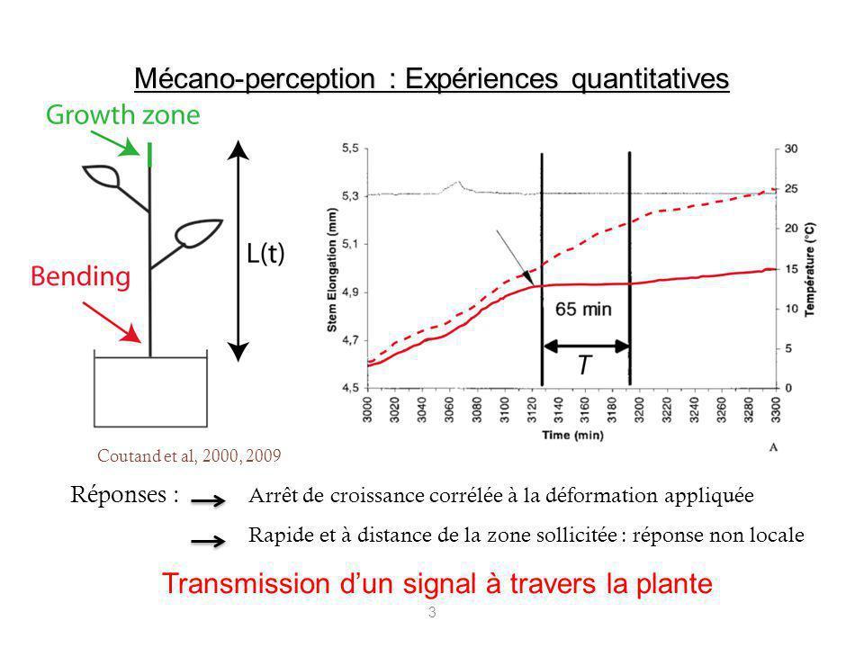 3 Réponses : Arrêt de croissance corrélée à la déformation appliquée Rapide et à distance de la zone sollicitée : réponse non locale Mécano-perception