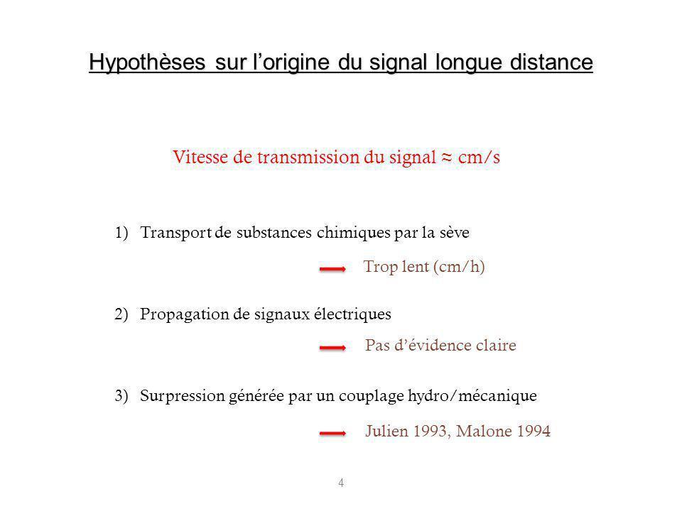 4 1)Transport de substances chimiques par la sève 2)Propagation de signaux électriques 3)Surpression générée par un couplage hydro/mécanique Vitesse d