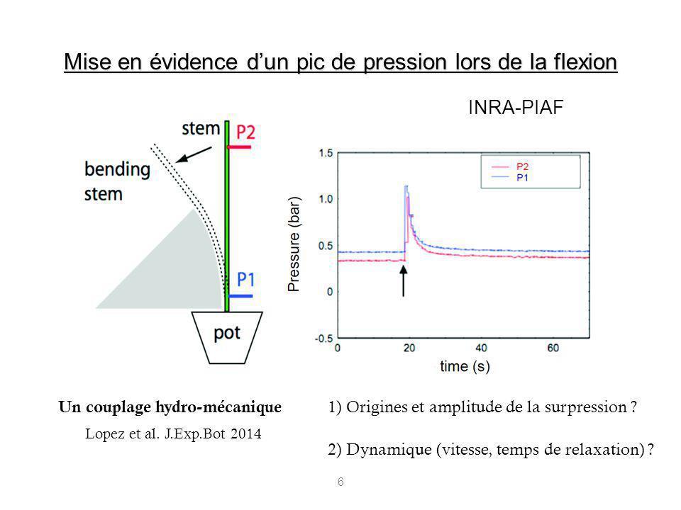 6 Lopez et al. J.Exp.Bot 2014 Un couplage hydro-mécanique Mise en évidence dun pic de pression lors de la flexion INRA-PIAF 1) Origines et amplitude d