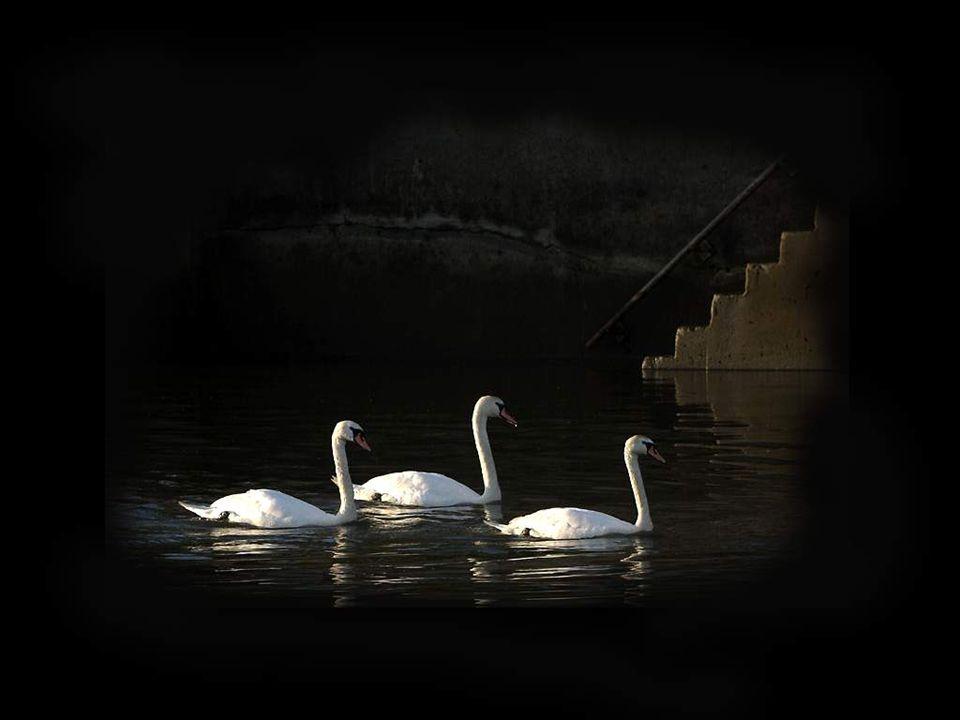 L'eau profonde ressemble à nos yeux; ces étangs Où chaque siècle ajoute, avec d'obscurs mirages, Au poids de sa lourdeur l'ombre de ses ombrages;