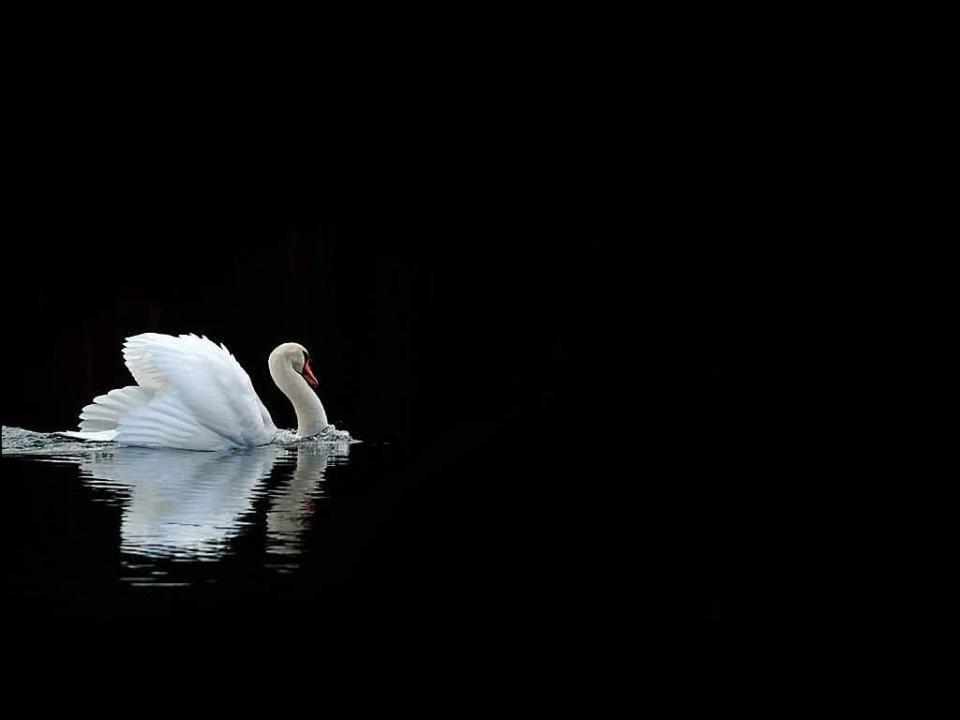 Lac des Cygnes – Ouverture – Peter Tchaikovsky Photographie – Dirk Vermeirre Création Florian Bernard Tous droits réservés 2005 jfxb@videotron.ca