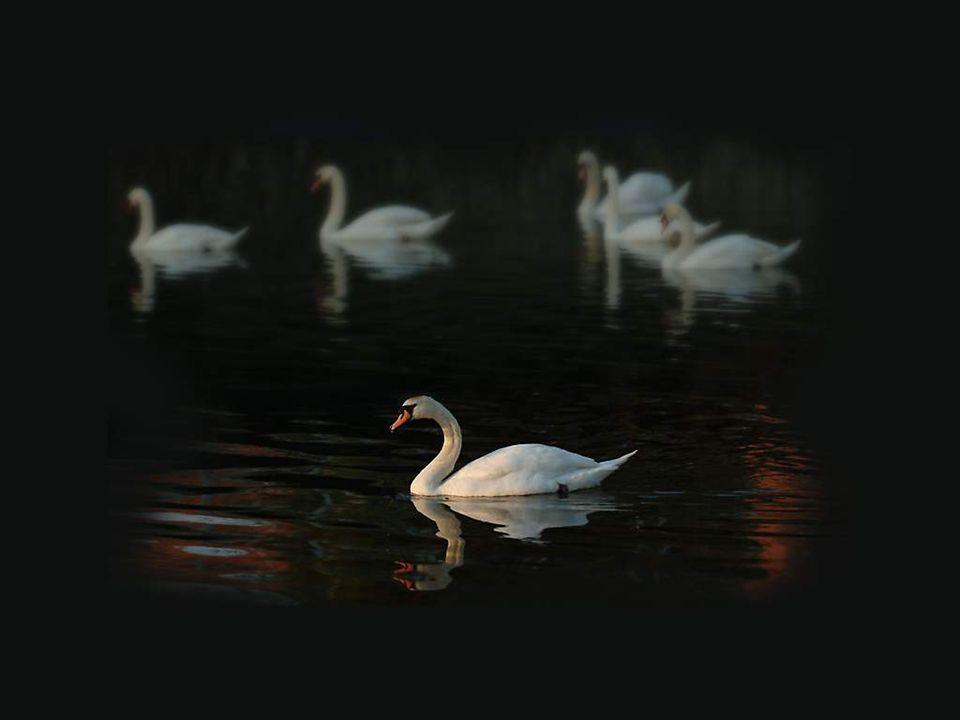 L eau profonde ressemble à nos yeux; ces étangs Où chaque siècle ajoute, avec d obscurs mirages, Au poids de sa lourdeur l ombre de ses ombrages;