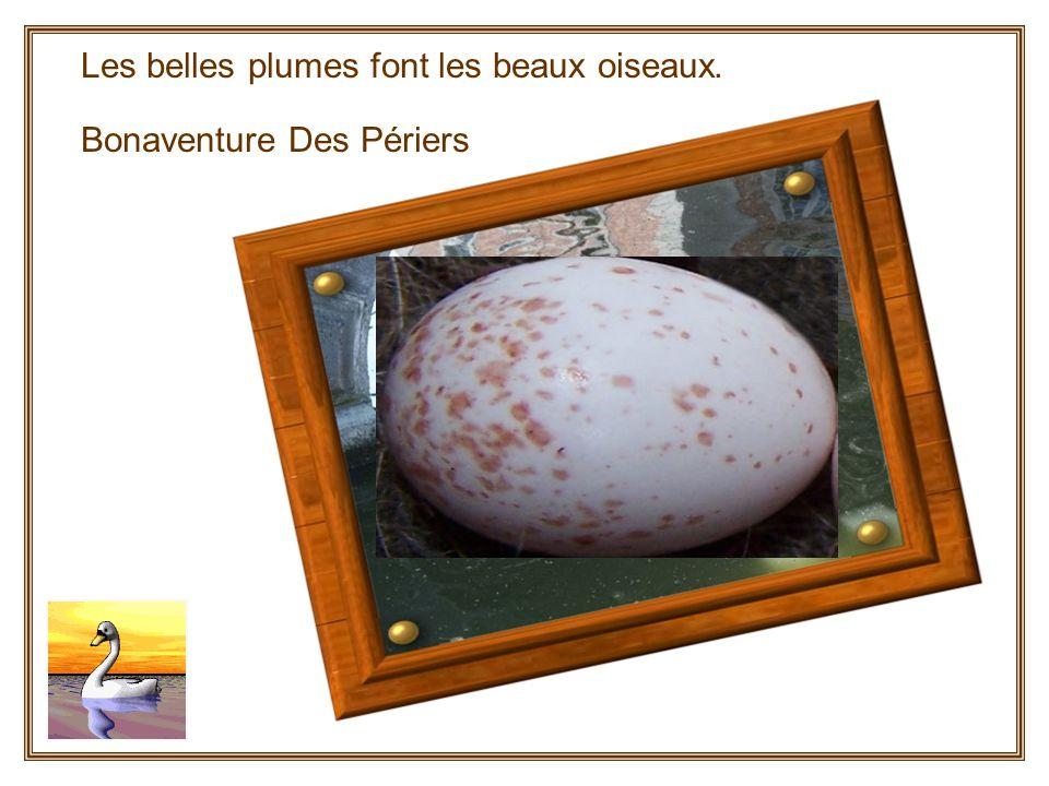 Naissance dune mésange Photos de Didier BethuneSaint Rémy de Blot Concepteur du diaporama :Bebertchi..(modifié par Marthe le 17 juin 2008i) Ma naissance…Quelle Aventure!!!