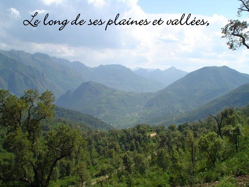 Mon Algérie, sent la fleur doranger,