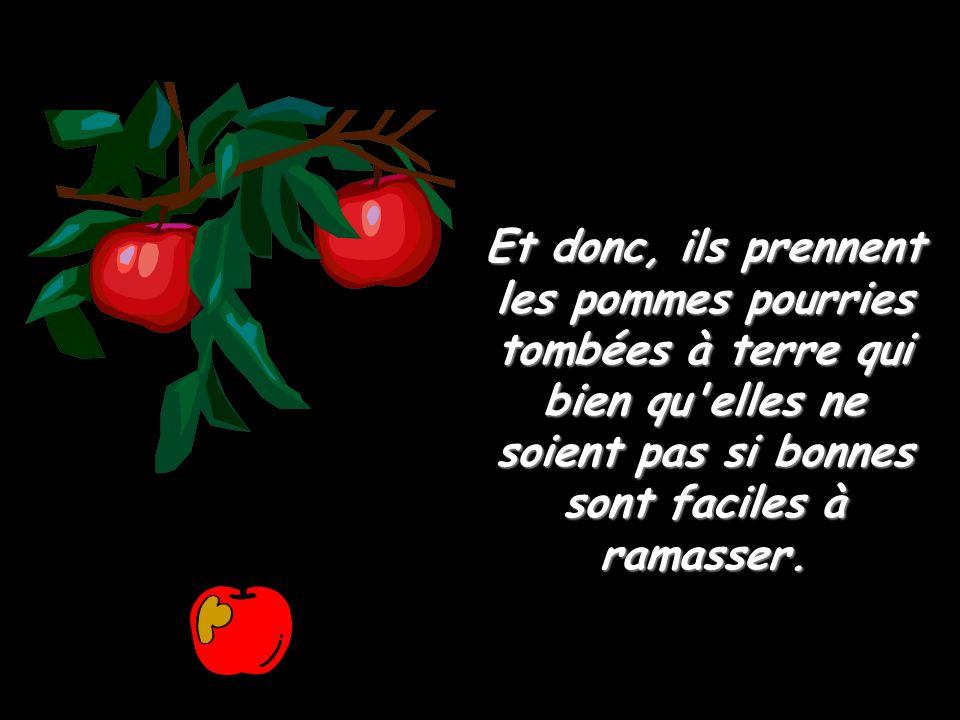 Et donc, ils prennent les pommes pourries tombées à terre qui bien qu elles ne soient pas si bonnes sont faciles à ramasser.