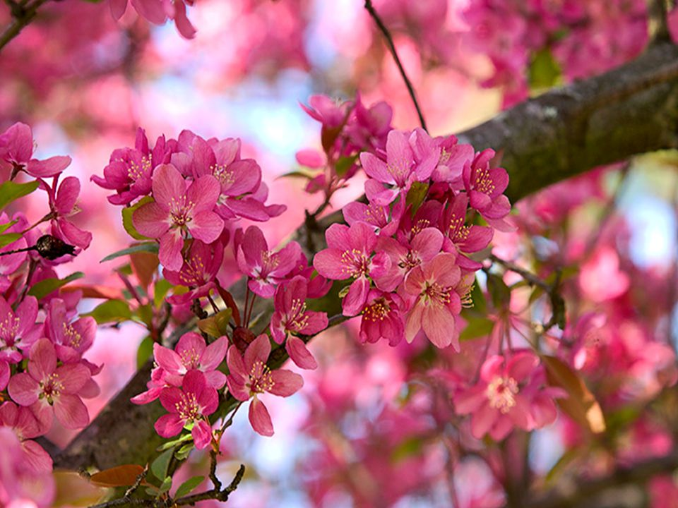 Crois en ton cœur que quelque chose de merveilleux est sur le point d'arriver. Aime ta propre vie.