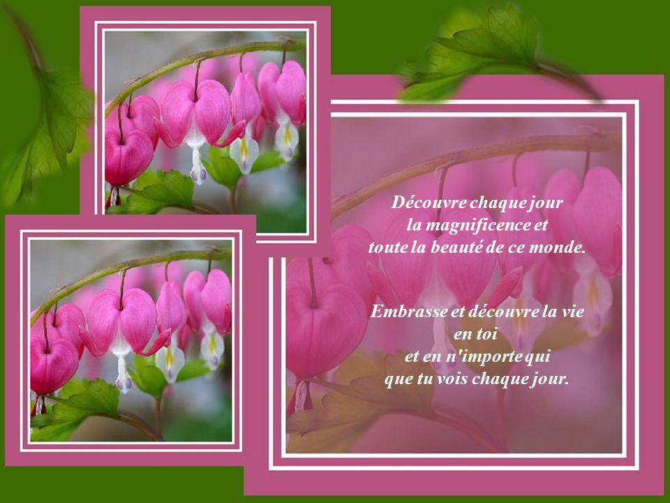 Crois en ton cœur Texte auteur inconnu Bonne Journée et croyez à tout ce qui vient de votre cœur.