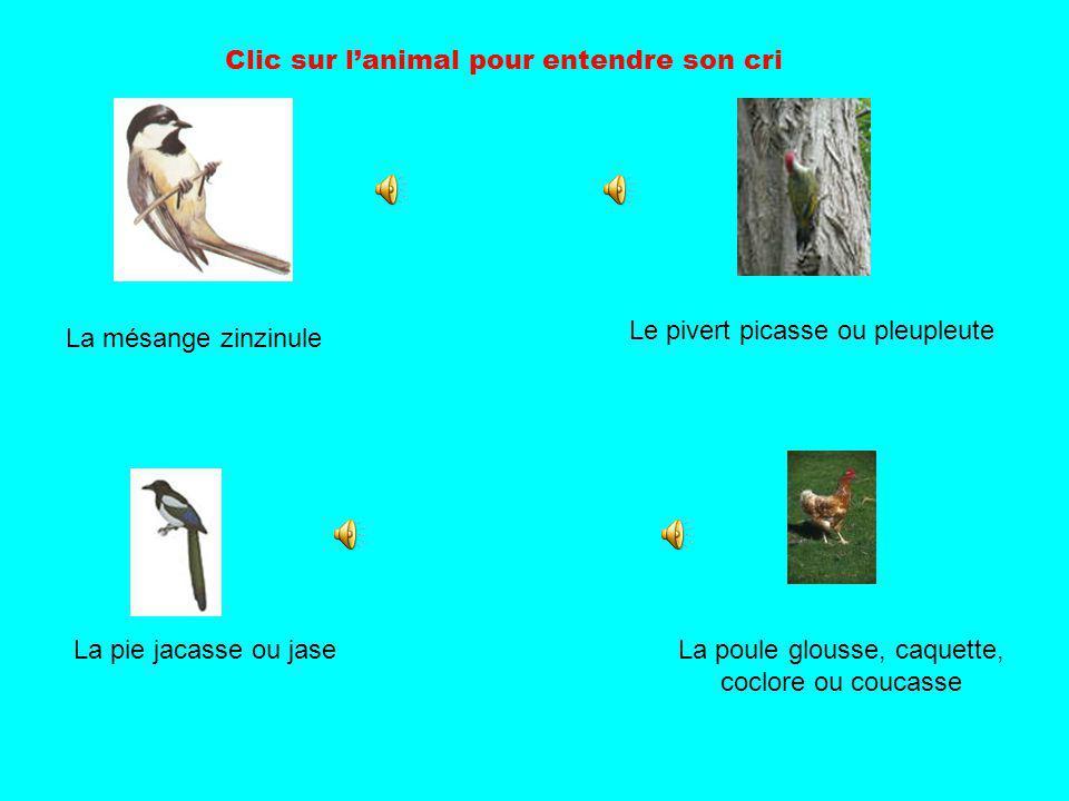 Clic sur lanimal pour entendre son cri La mésange zinzinule Le pivert picasse ou pleupleute La pie jacasse ou jaseLa poule glousse, caquette, coclore ou coucasse