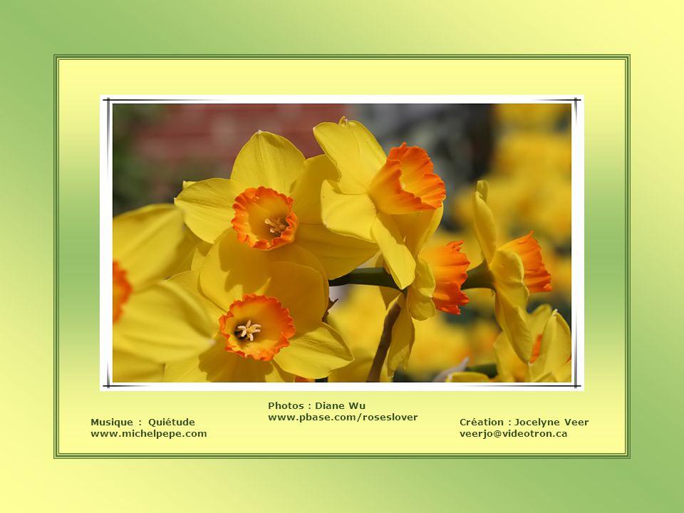 Musique : Quiétude www.michelpepe.com Création : Jocelyne Veer veerjo@videotron.ca Photos : Diane Wu www.pbase.com/roseslover