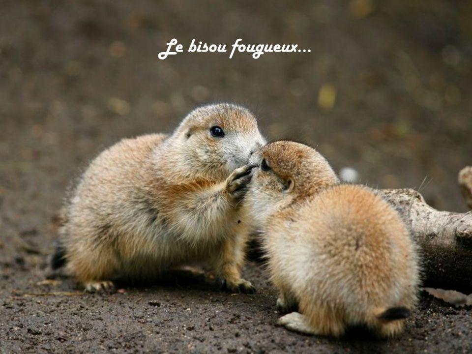 Un délice pour lêtre embrassé !