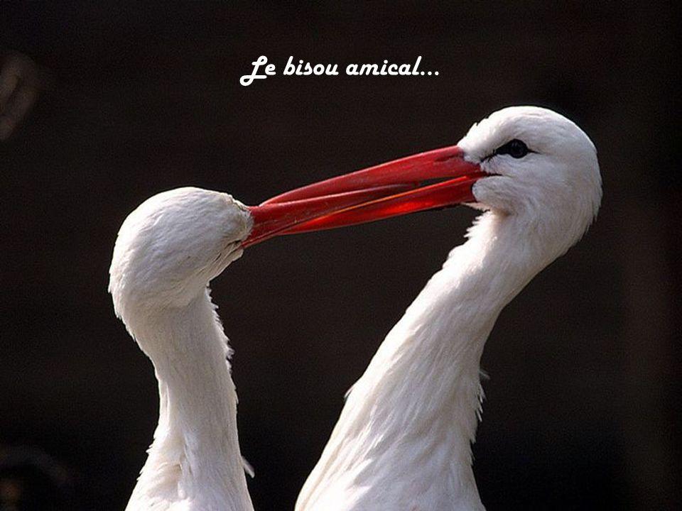 Le bisou amical…
