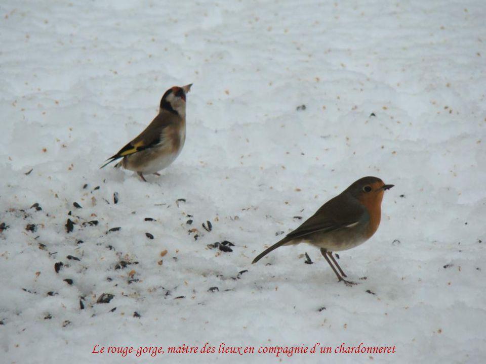 Les oiseaux se rapprochent des habitations
