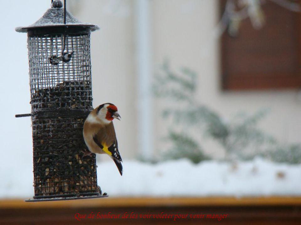 Lhiver la quête de nourriture est vitale pour les oiseaux