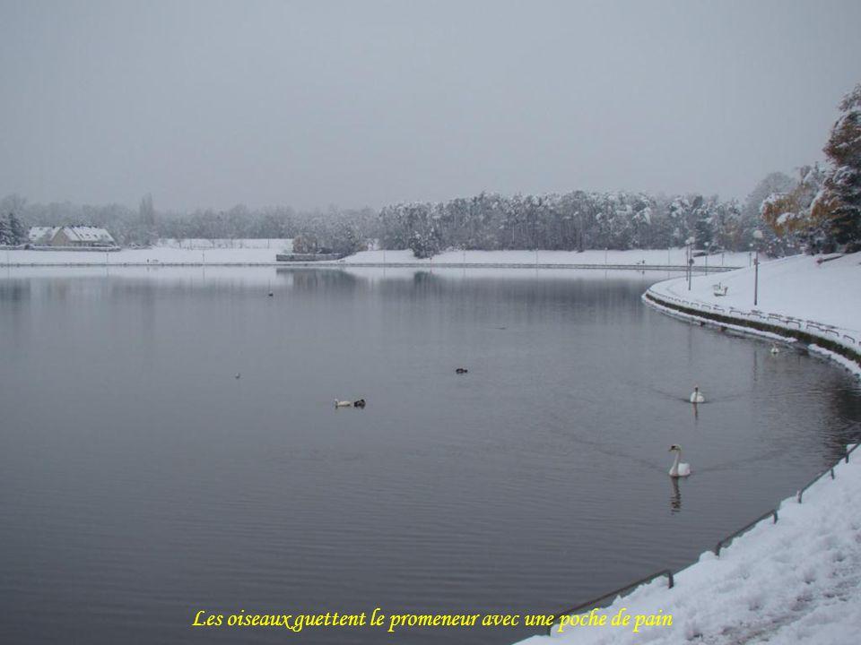 Le lac de lOrée de Sologne