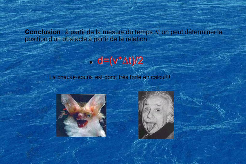 d=(v*t)/2 d=(v*t)/2 Conclusion : à partir de la mesure du temps t on peut déterminer la position d un obstacle à partir de la relation : La chauve-souris est donc très forte en calcul!!!