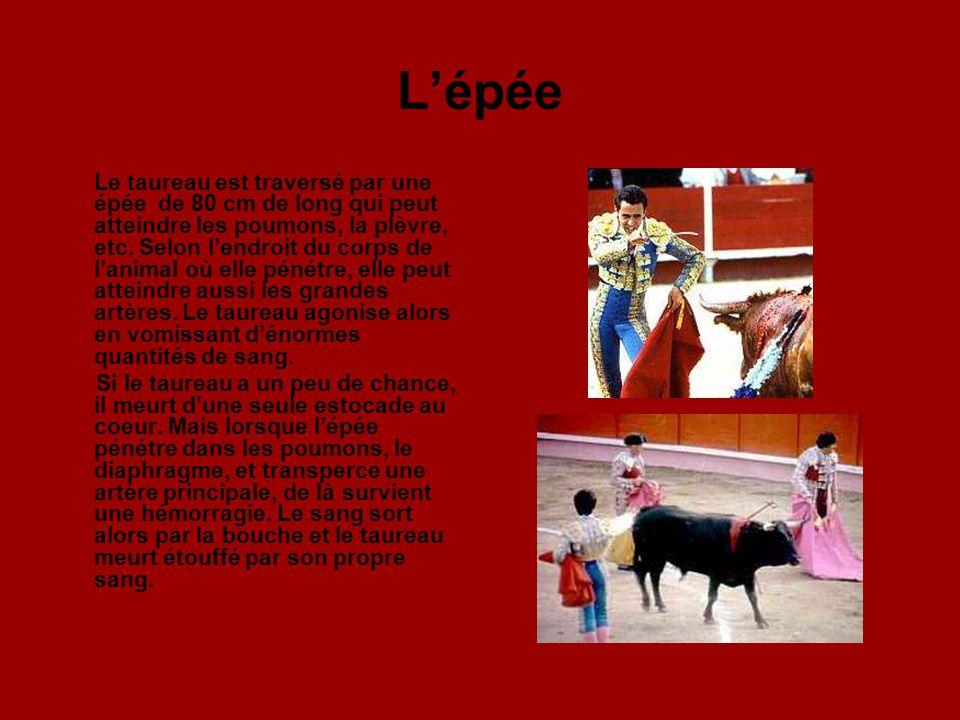 Demostrando Valor La perte de sang et les lésions aux muscles et nerfs de la colonne vertébrale font que le taureau lève la tête de manière anormale.