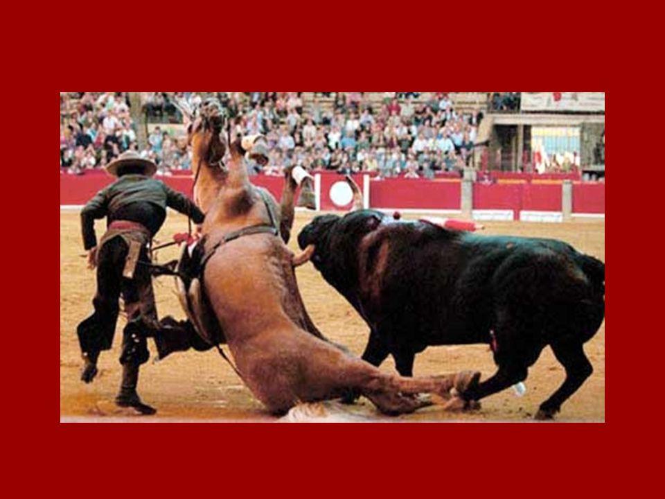 Les chevaux des picadors Il sagit de chevaux nayant aucune valeur commerciale.
