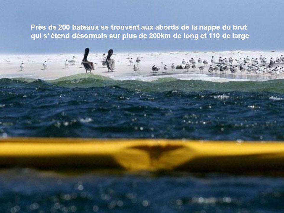Près de 200 bateaux se trouvent aux abords de la nappe du brut qui s étend désormais sur plus de 200km de long et 110 de large