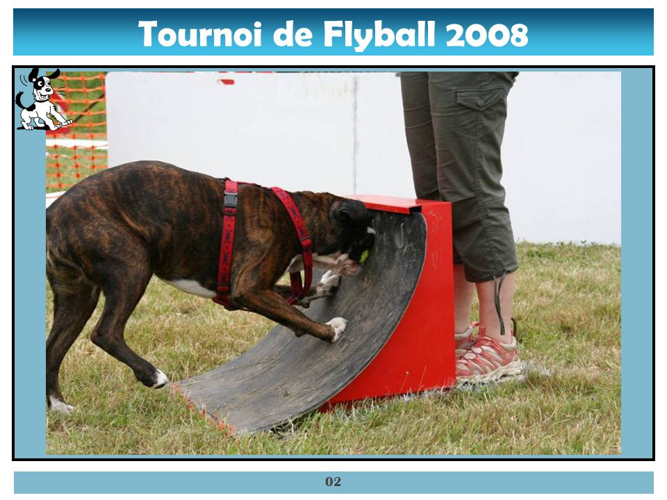Tournoi de Flyball 2008 01