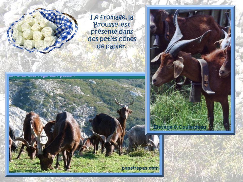 Blotti dans son vallon, Le Rove est entouré de garrigues odorantes. Un village serait apparu là au XIIe siècle. Mais des grottes, des endroits secs so