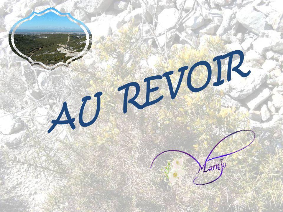 Musique : Trouvères et troubadours - Ductia Les Musiciens de Provence Informations prises sur divers sites. Photos, conception et réalisation: Marie-J