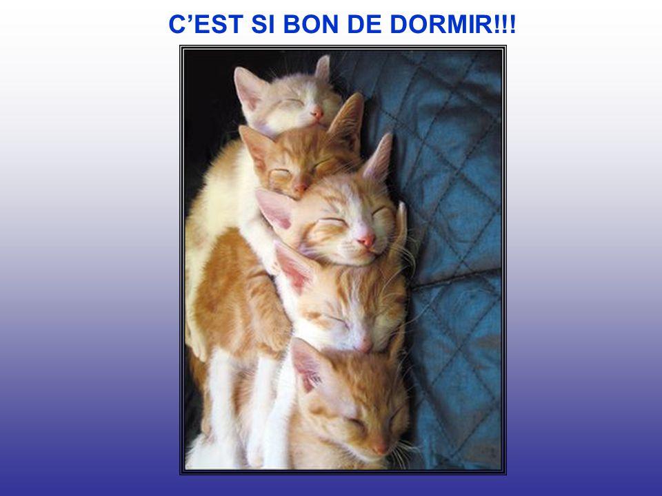 CEST SI BON DE DORMIR!!!