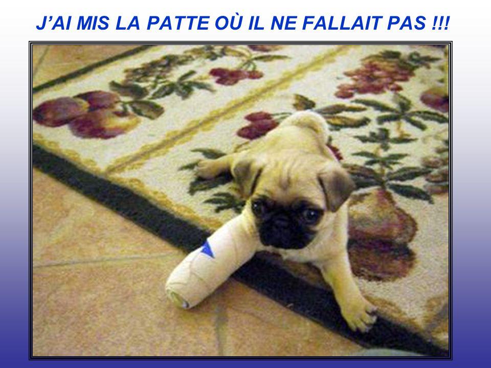JAI MIS LA PATTE OÙ IL NE FALLAIT PAS !!!