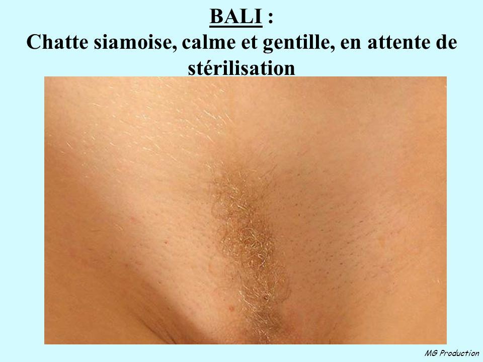 MG Production FRIMOUSSE : Chaton femelle, calme et poils semi-longs