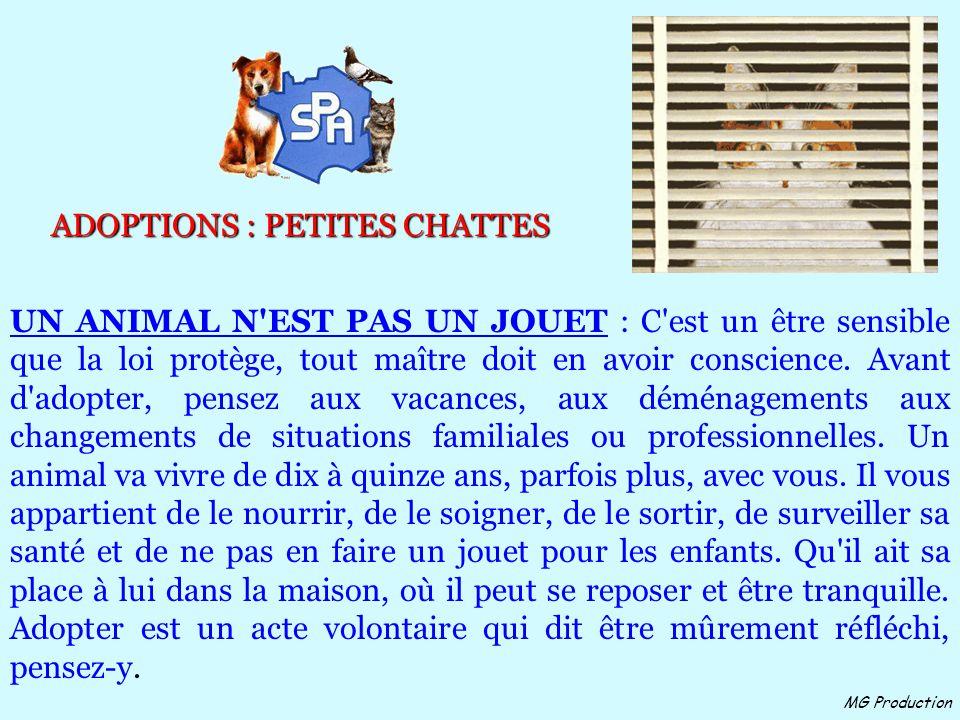 MG Production ADOPTIONS : PETITES CHATTES UN ANIMAL N EST PAS UN JOUET : C est un être sensible que la loi protège, tout maître doit en avoir conscience.
