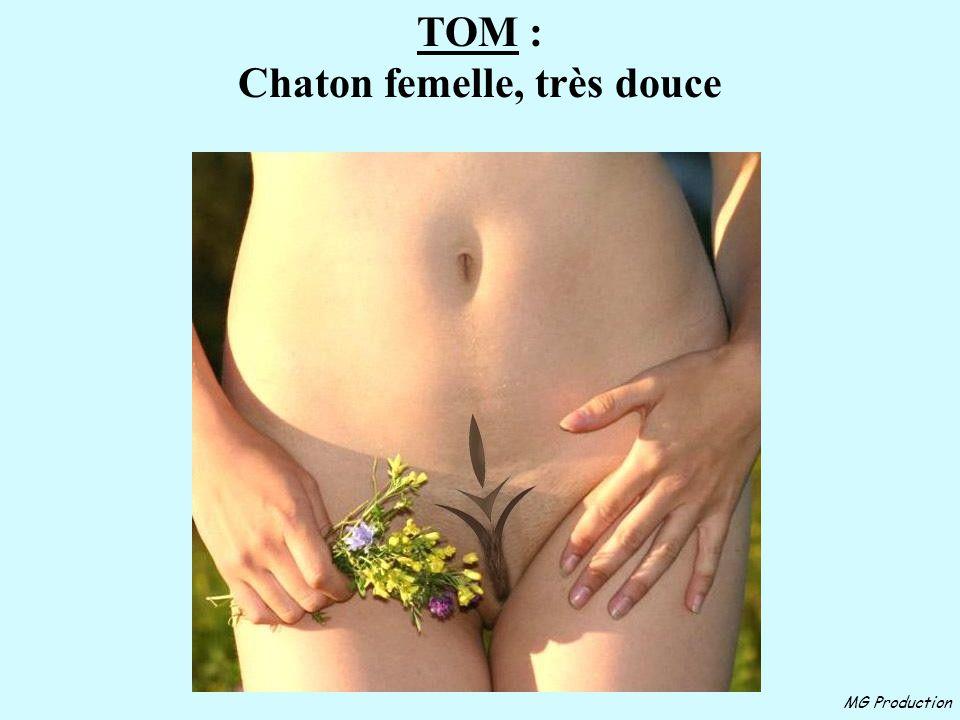 MG Production TOM : Chaton femelle, très douce