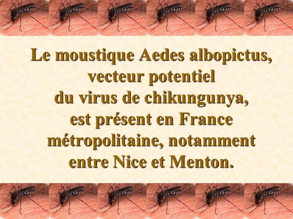 Chikungunya Si vous nêtes pas trop fatigué, cliquez pour voir la suite