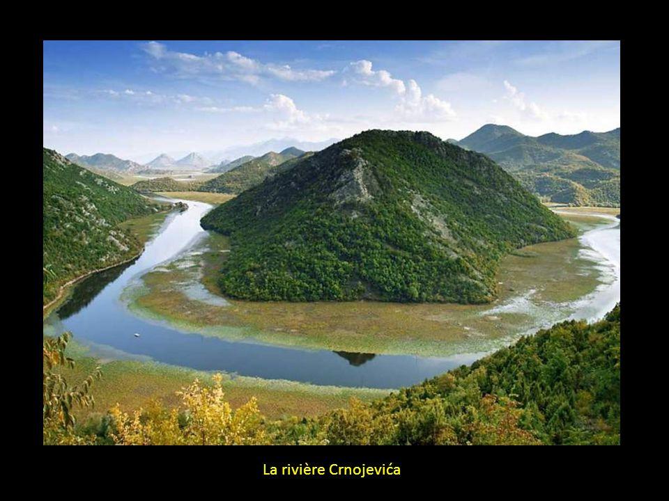 La rivière Crnojevića