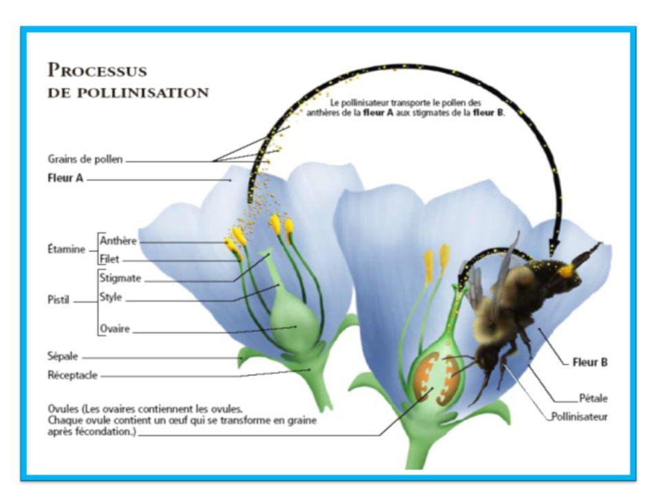 Bien que le pollen lui-même est inoffensif, votre système immunitaire lutte pour défendre votre corps du pollen ce qui provoque les symptômes associés