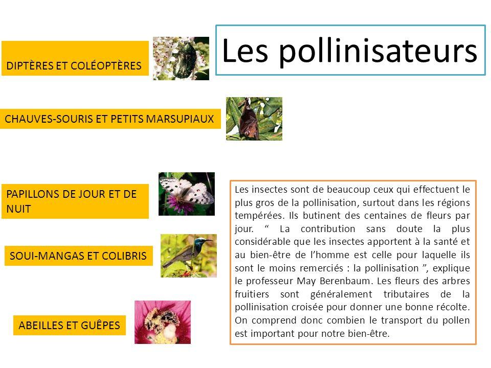 Les insectes sont de beaucoup ceux qui effectuent le plus gros de la pollinisation, surtout dans les régions tempérées.