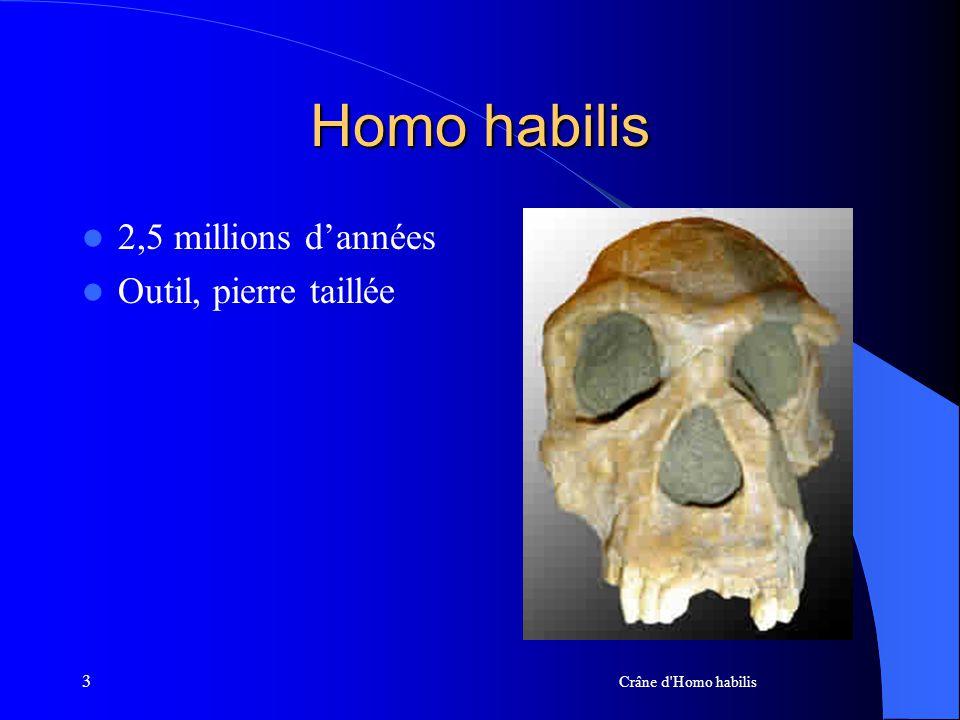 3 Homo habilis 2,5 millions dannées Outil, pierre taillée Crâne d'Homo habilis
