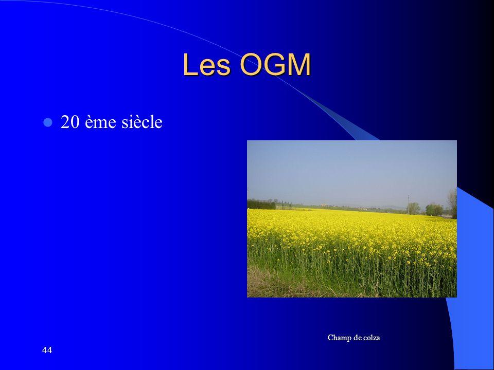 44 Les OGM 20 ème siècle Champ de colza