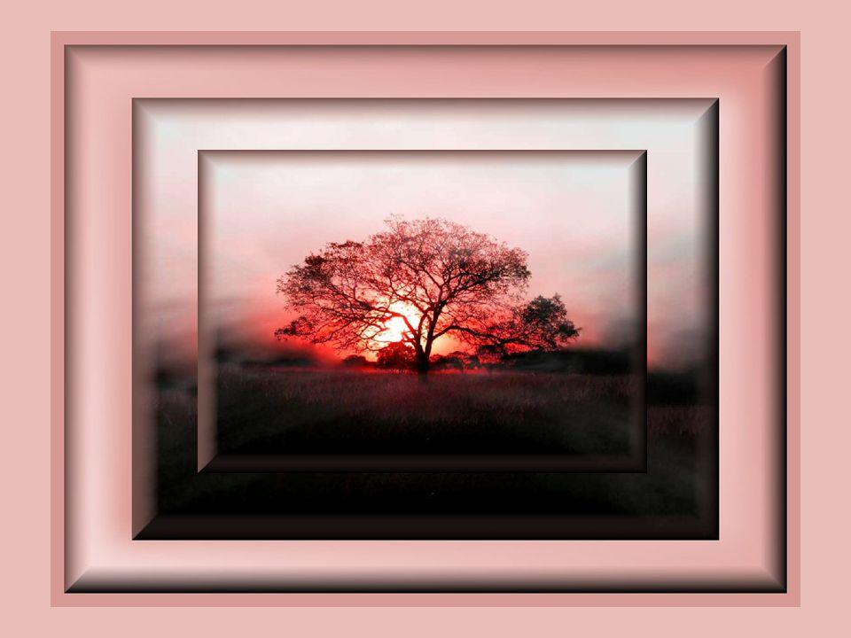 Apprivoiser la tendresse Est partir en rêve… Ce n'est pas être sur un nuage mais Vivre des moments de douceur intense Ou plus rien n'existe que la ten