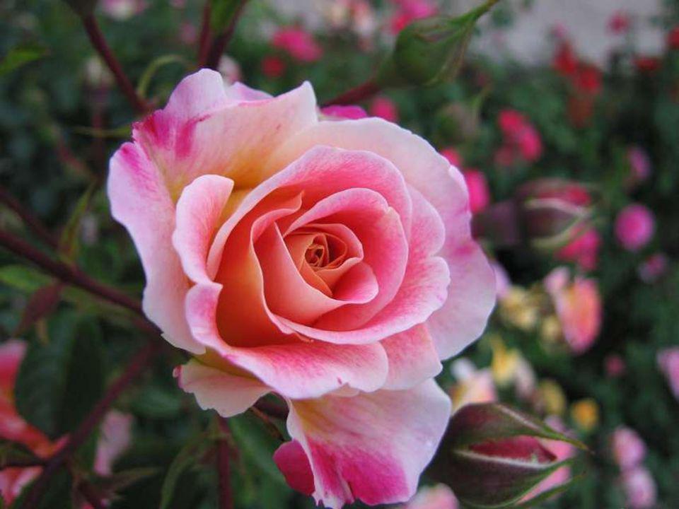 Sentir sa tendresse…c est comme une caresse… Vous la respectez avec une grande noblesse… Vous frôlez son âme avec courtoisie… Elle vous ressent même dans le silence vos mots non dits … Ces liens se forment sans rien forcer… C est un Parfum qui vient vous dégager de vos soucis…